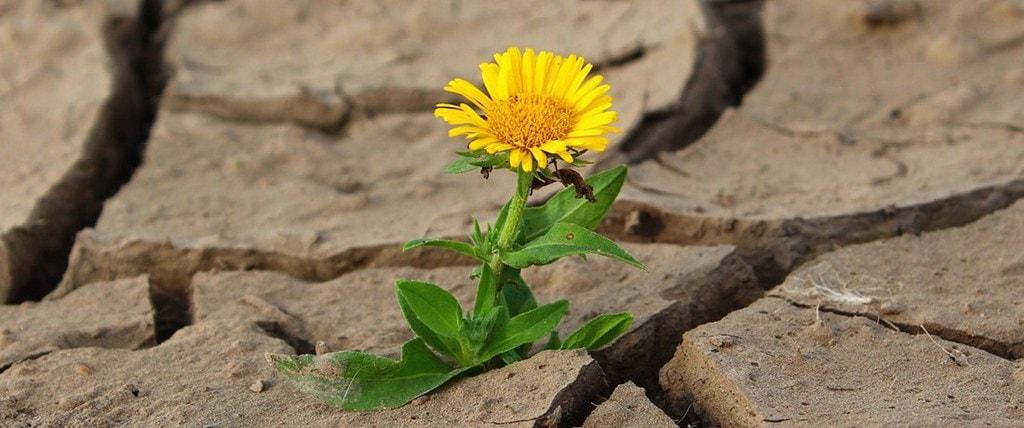 flower-887443_1280-crop