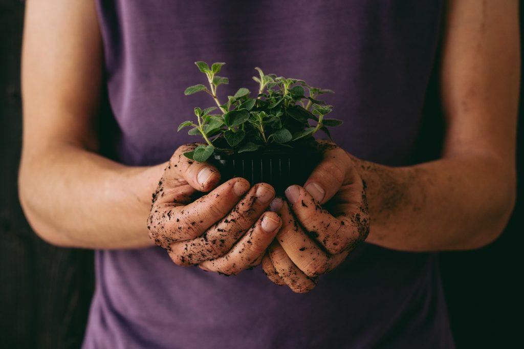 8 ziół dla mężczyzn, które poprawią nasienie i płodność skuteczniej niż suplementy