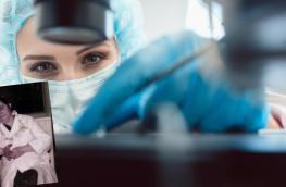 Miriam Menkin: in vitro