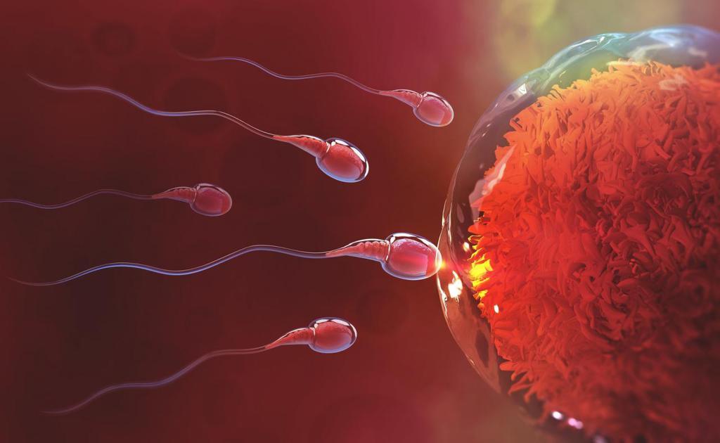 Dlaczego komórki jajowe wyglądają prawidłowo, ale nie zapładniają się