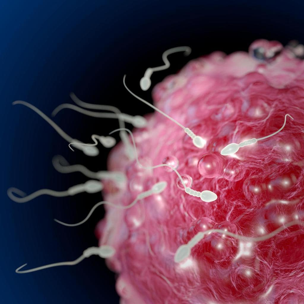 Nowa metoda efektywnej selekcji plemników do zabiegu in vitro. Po raz pierwszy w Polsce