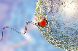 pytania do embriologa