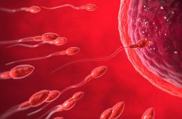 fragmentacja DNA plemników a ciąża