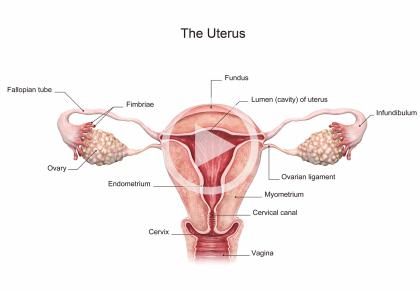 Wady i schorzenia macicy a niepłodność