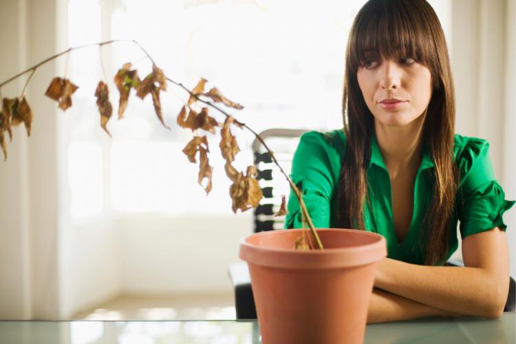 przedwczesna menopauza a starania o ciążę