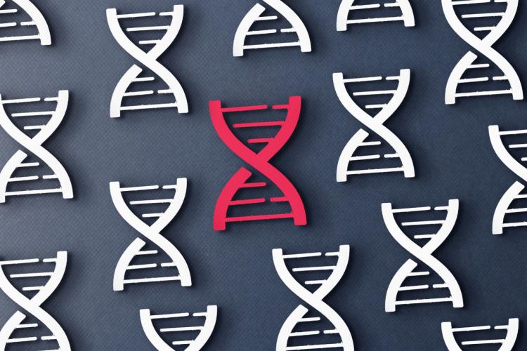 Mutacja MTHFR a ciąża